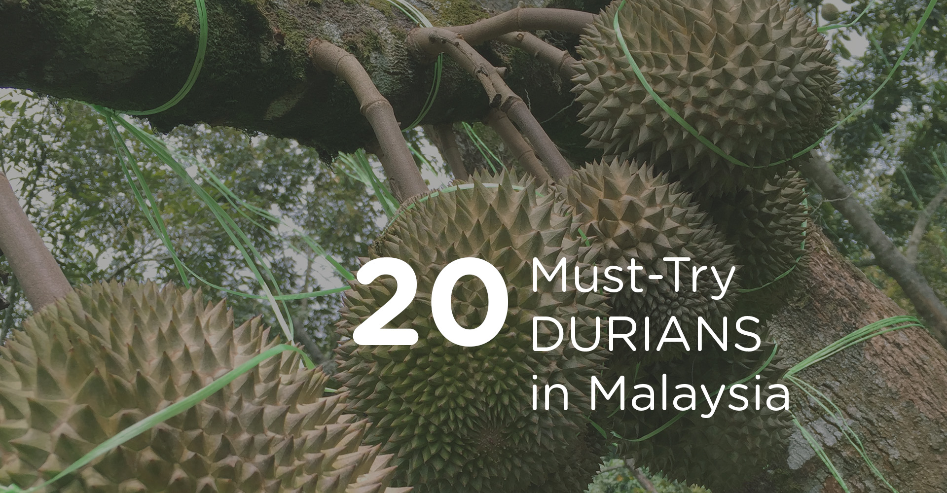 20 Must-Try Durians in Malaysia